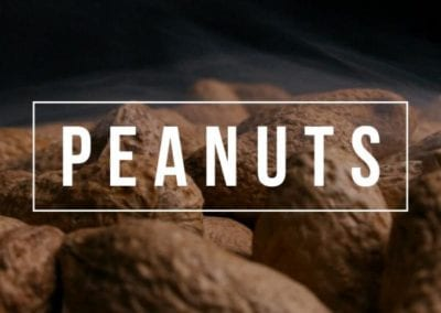 CACAHUETES PEANUTS